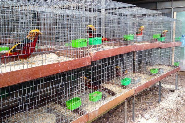 Временное содержание птиц в клетках