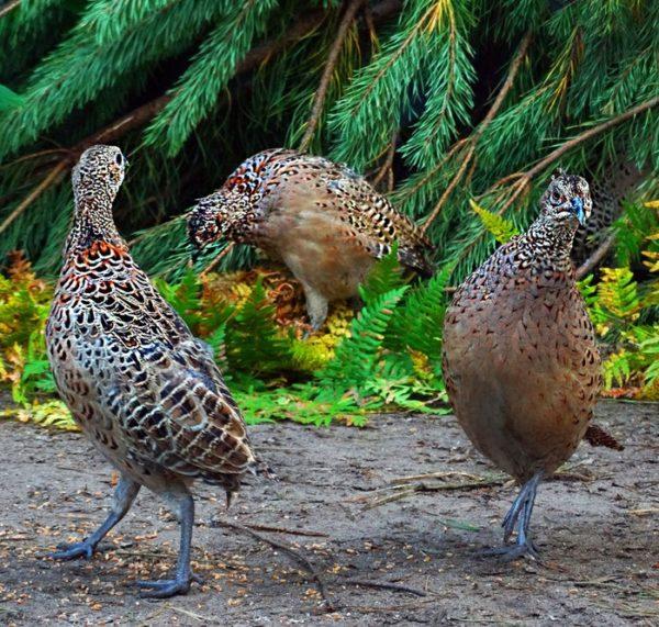 Птицы в естественной среде обитания