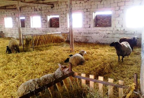 Капитальный загон для овец