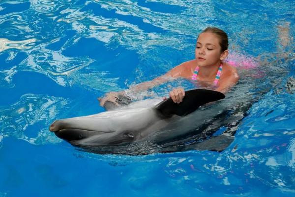 Дельфины становятся лучшими друзьями для людей