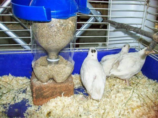 Комбинированный корм для перепелов имеет более мелкие гранулы, чем для прочих домашних птиц