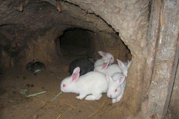 Кролики в норе