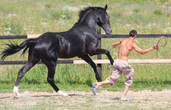 Воспитывать лошадей нужно не с позиции силы, а с позиции любви