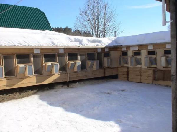 Животных содержат в клетках даже зимой