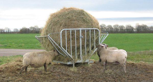 Трава – основной продукт для питания баранов
