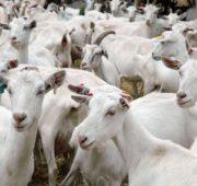 Государство поддерживает развитие многих отраслей животноводства