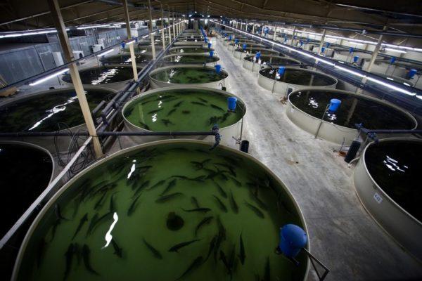 Рыбная ферма – необычный и рентабельный бизнес