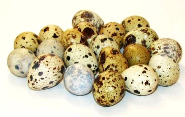 Перепелиные яйца от особей разных пород могут отличаться по цвету