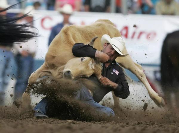 В результате соревнований спортсмены и животные часто получают травмы