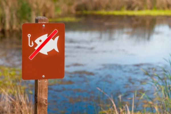 В период нереста повсеместно запрещается отлов промысловой рыбы