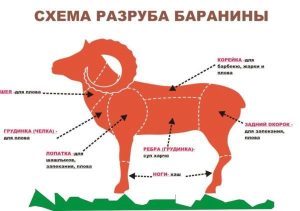 Примерная схема для разруба барана