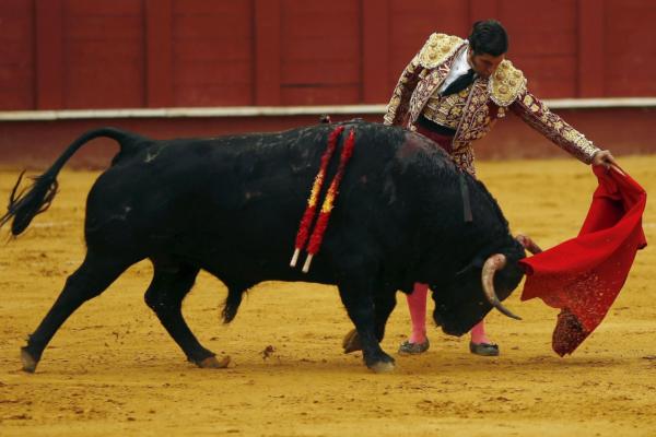 Испанский аналог спорта с быками славится жестокостью и вызывает общественное порицание