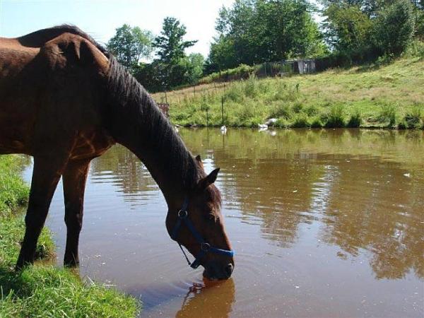Лошадям требуется постоянный доступ к воде