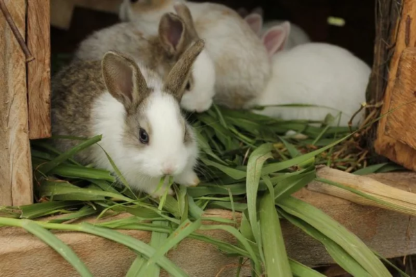 Грызунов кормят слегка подвяленными травами