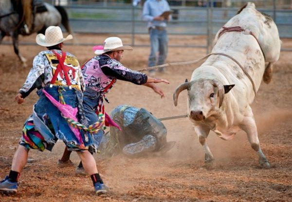 Взрослый бык может серьезно травмировать и даже убить человека