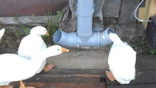 Поилка для птиц из обрезков труб ПВХ