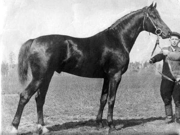 Русский верховой конь