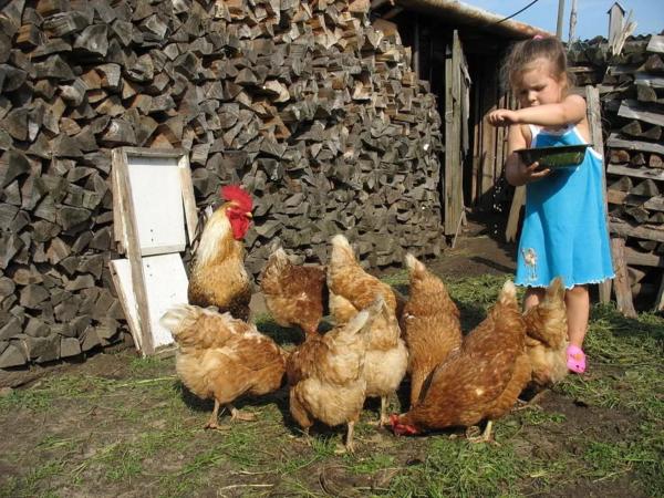Для начала будет достаточно и маленькой фермы