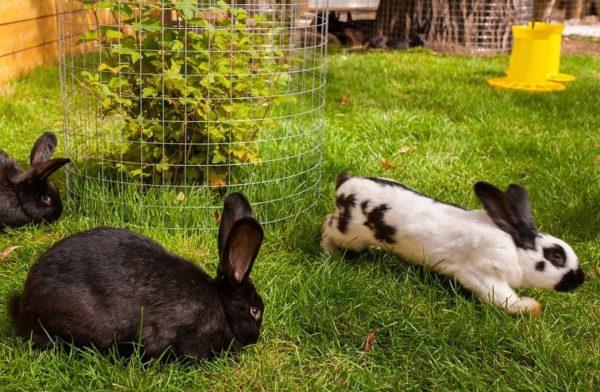 Разведение кроликов лишь для собственных нужд не нужно регистрировать
