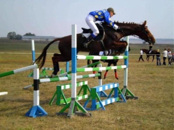 Участие русского верхового коня на турнире