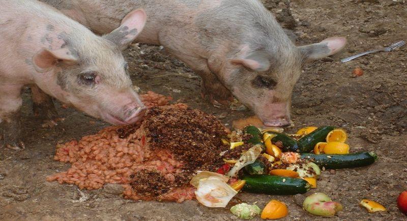 Плохое питание негативно влияет на иммунитет животных в целом