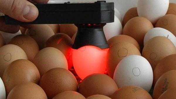 Существуют ручные овоскопы, позволяющие просвечивать яйца, не трогая их