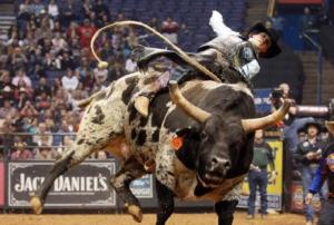 Родео на быках