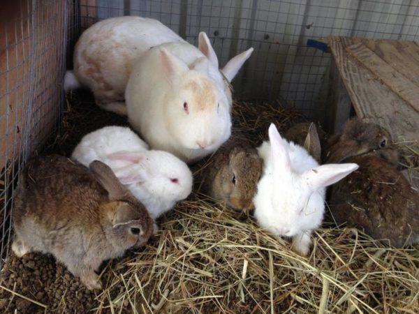 Крольчата в клетке