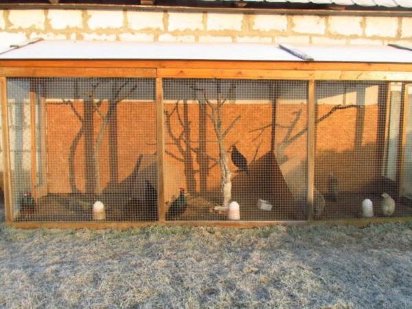 Вольер с фазанами