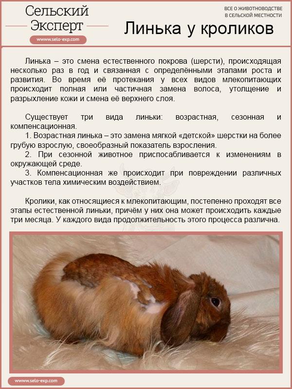 Линька у кроликов