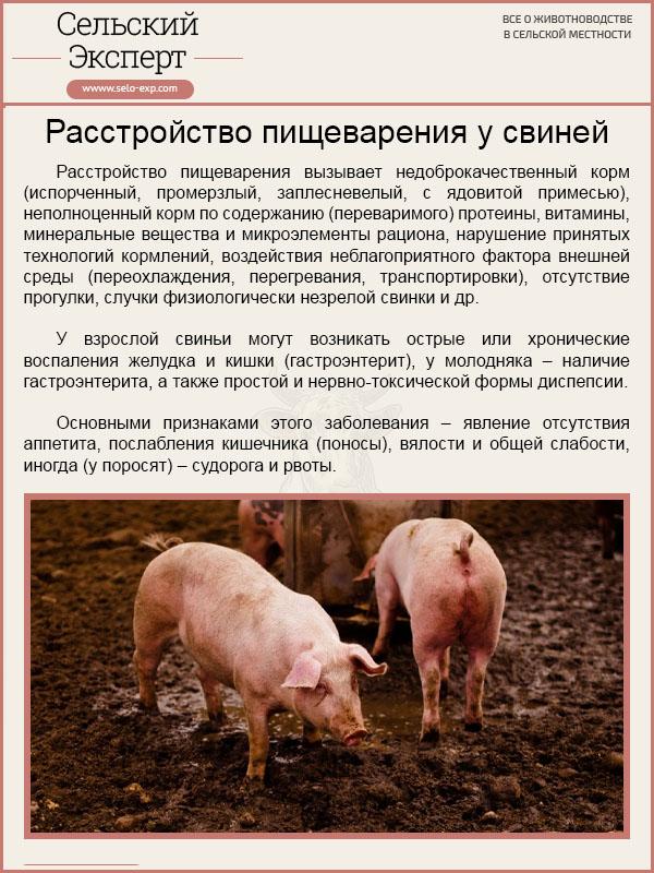 Расстройство пищеварРасстройство пищеварения у свинейения у свиней