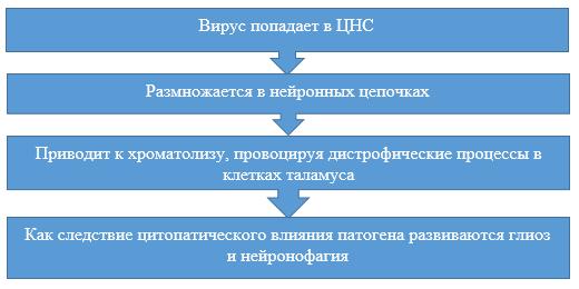 Этапы развития болезни