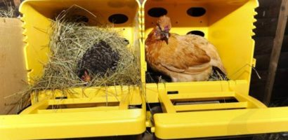 Некоторые фермеры не хотят тратить время на создание своими руками гнезд для кур