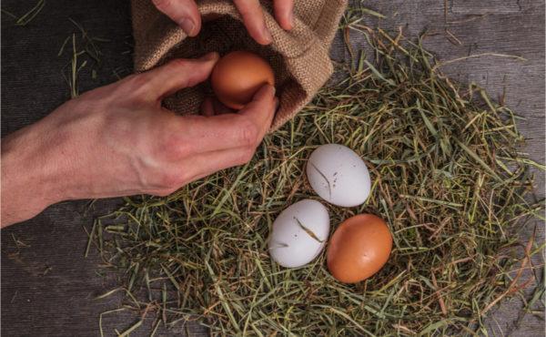 Для поддержания здоровья курицы необходимо следить за чистотой в гнезде