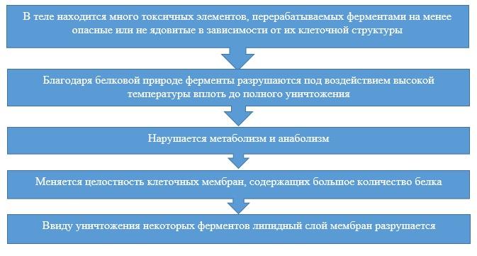 Процессы в организме при высокой температуре