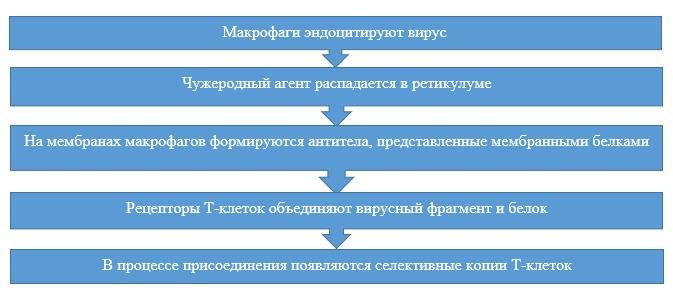 Подробная схема прикрепления антигенов к антителам