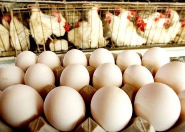 Надо соблюдать осторожность при работе с мясом и яйцами