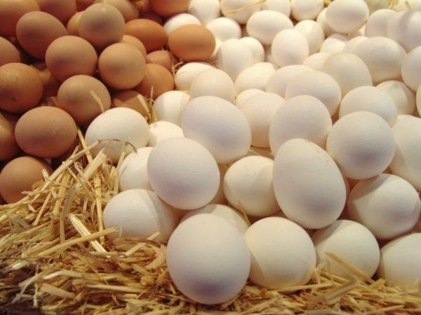Чтобы получать яйца разных цветов, куриц нужно покупать темного и светлого окраса