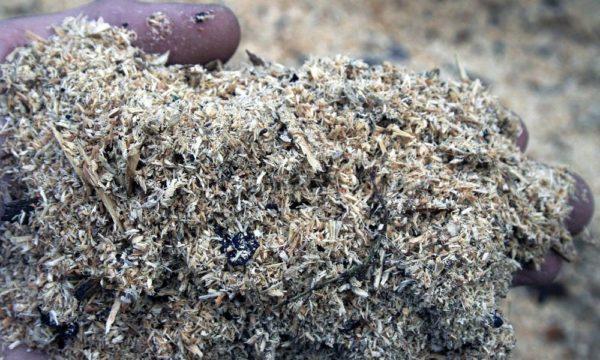 Толщина подстилки в курятнике — не менее 2-3 см