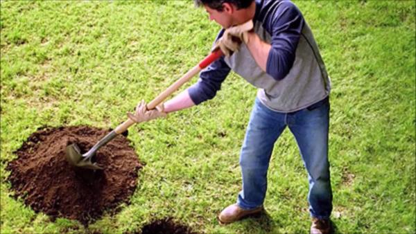 В процессе работы используют совковую лопату