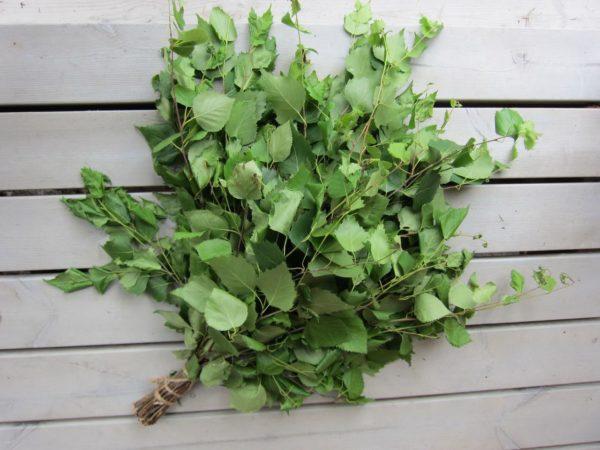 Обязательным элементом питания являются сухие веники из листьев деревьев