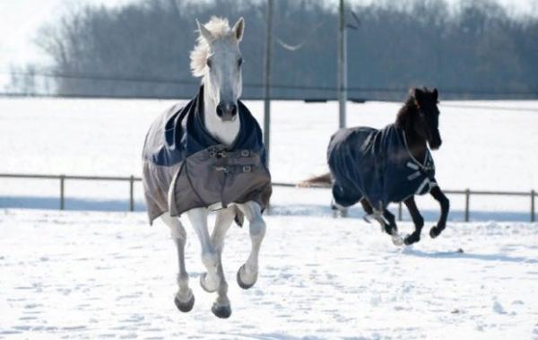 Накидка не должна доставлять коню дискомфорт