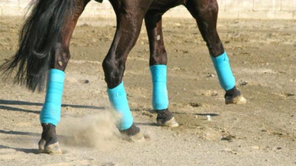 Хлопчатобумажные бинты на ногах скакуна