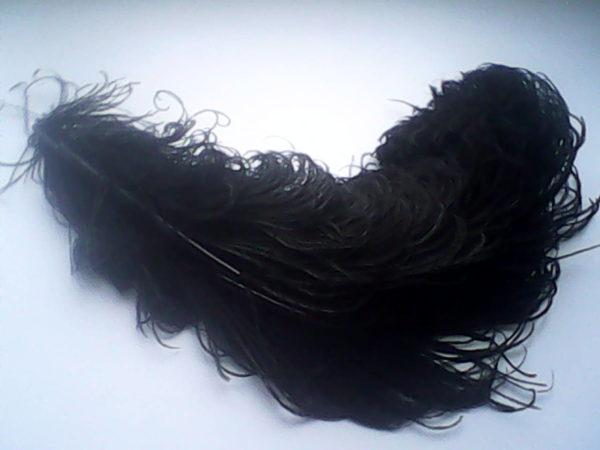 Через каждое перо проходит кровеносный сосуд