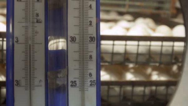 Важно правильно поддерживать температуру в инкубаторе