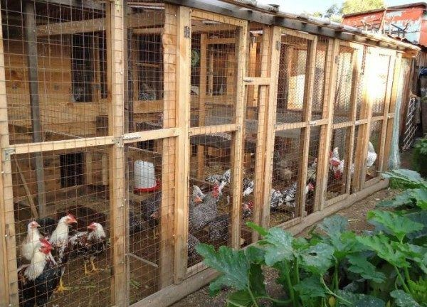Мини-ферма может вмещать до ста куриц-несушек