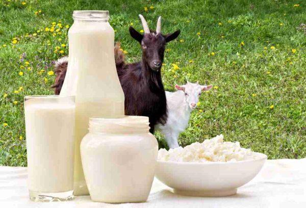 Мировое потребление козьего молока больше коровьего
