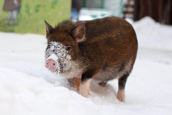 Взрослые животные лучше реагируют на мороз, чем на жару