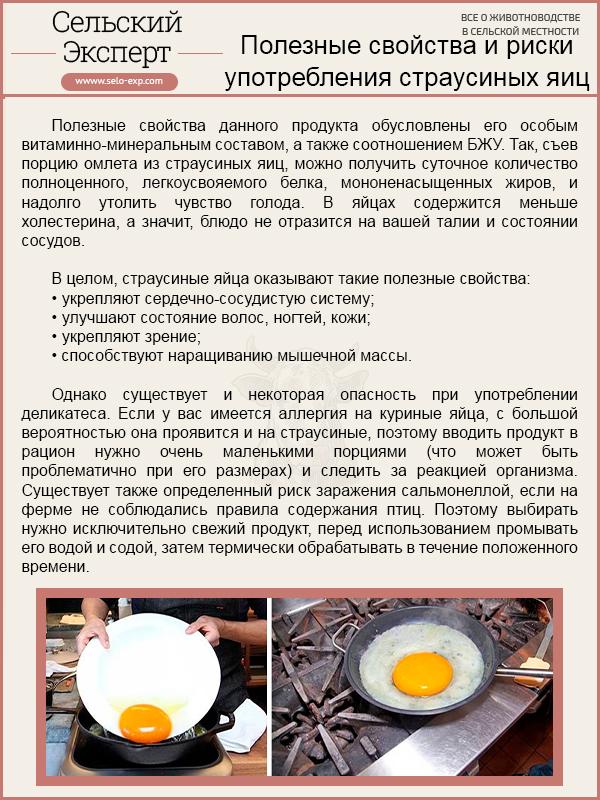 Полезные свойства и риски употребления страусиных яиц