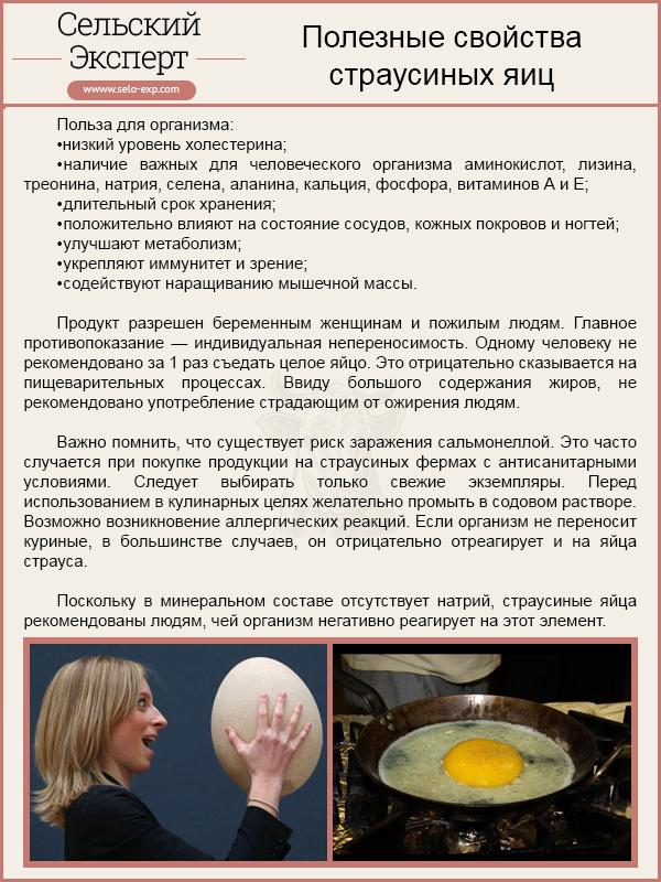 Полезные свойства страусиных яиц